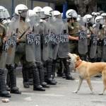 RIP 'Loukanikos' the Greek Riot Dog